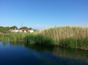 Marsh at Balmorhea