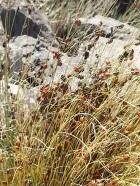 Ladybugs at top of Baldy Peak