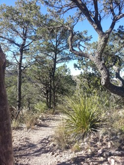 Pine Canyon Trail