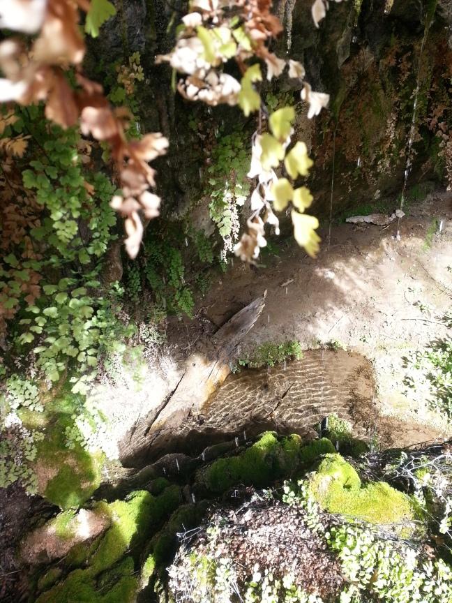 Ojito Adentro Trail